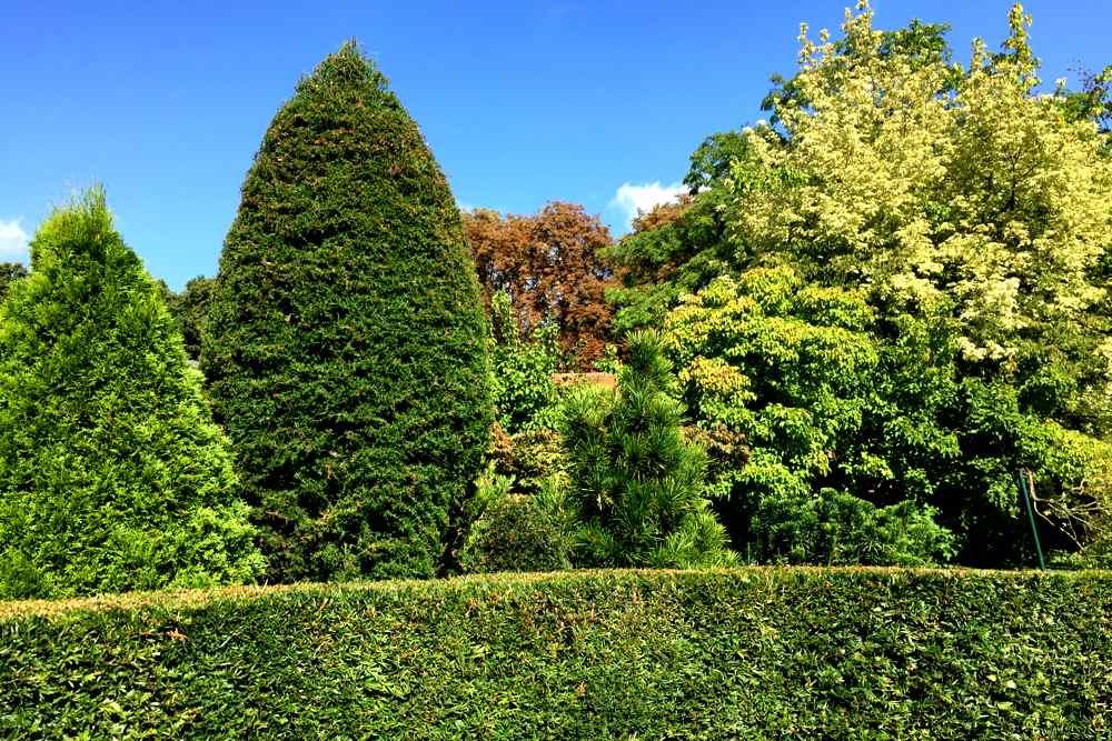 Gartengestaltung mit Immergrünen